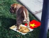 thdog2editedzl6